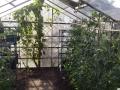 Root n Fruit Greenhouse.jpg