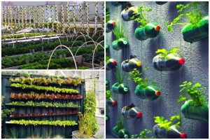 Innovative ideas for vertical cultivation